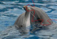 Игра Дельфины