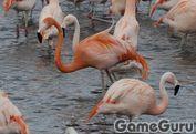 Игра Фламинго