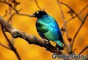 Игра Птица