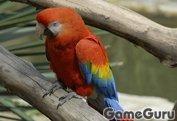 Игра Попугай