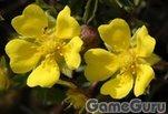 Играть бесплатно в Цветы