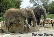 Игра Слоны