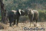 Играть бесплатно в Слоны