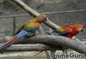 Игра Попугаи