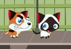 Игра Беги, котенок, беги