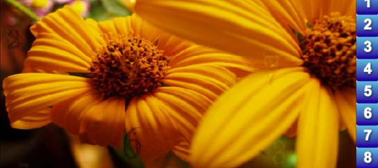игра Найди числа: цветы