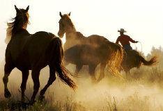 Игра Пазл с конями