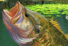 Игра Рыбалка в зеленой лагуне