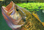 Рыбалка в зеленой лагуне