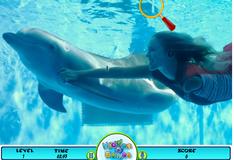 Игра Поиск букв на фотографии дельфина