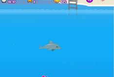 Шоу дельфинов 2