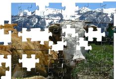 Игра Альпийская корова