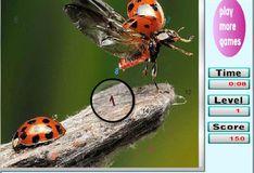 Игра Игра Поиск цифр: насекомые