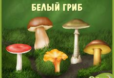 Игра Лесные грибы
