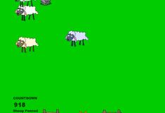 Загони овец