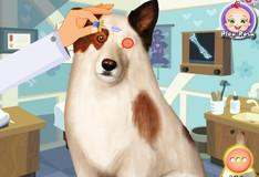 Игра Операция на собаке