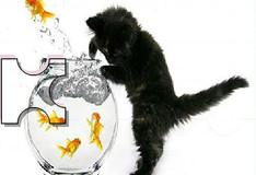 Игра Игра Пазл: Черный кот и красные рыбки