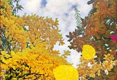 Гадание на листьях