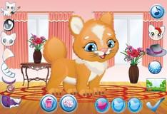 Игра Игра Маленький котик