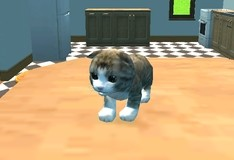 Игра Симулятор кота 3D