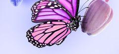 Игры Бабочки онлайн бесплатно