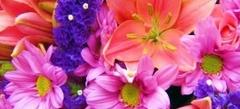 Игры Цветы онлайн бесплатно