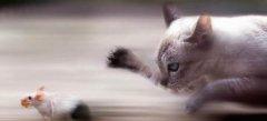 Игры Мышки кошки онлайн бесплатно