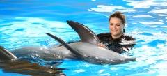 Игры С дельфином онлайн бесплатно