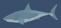 Игры Акулы онлайн бесплатно